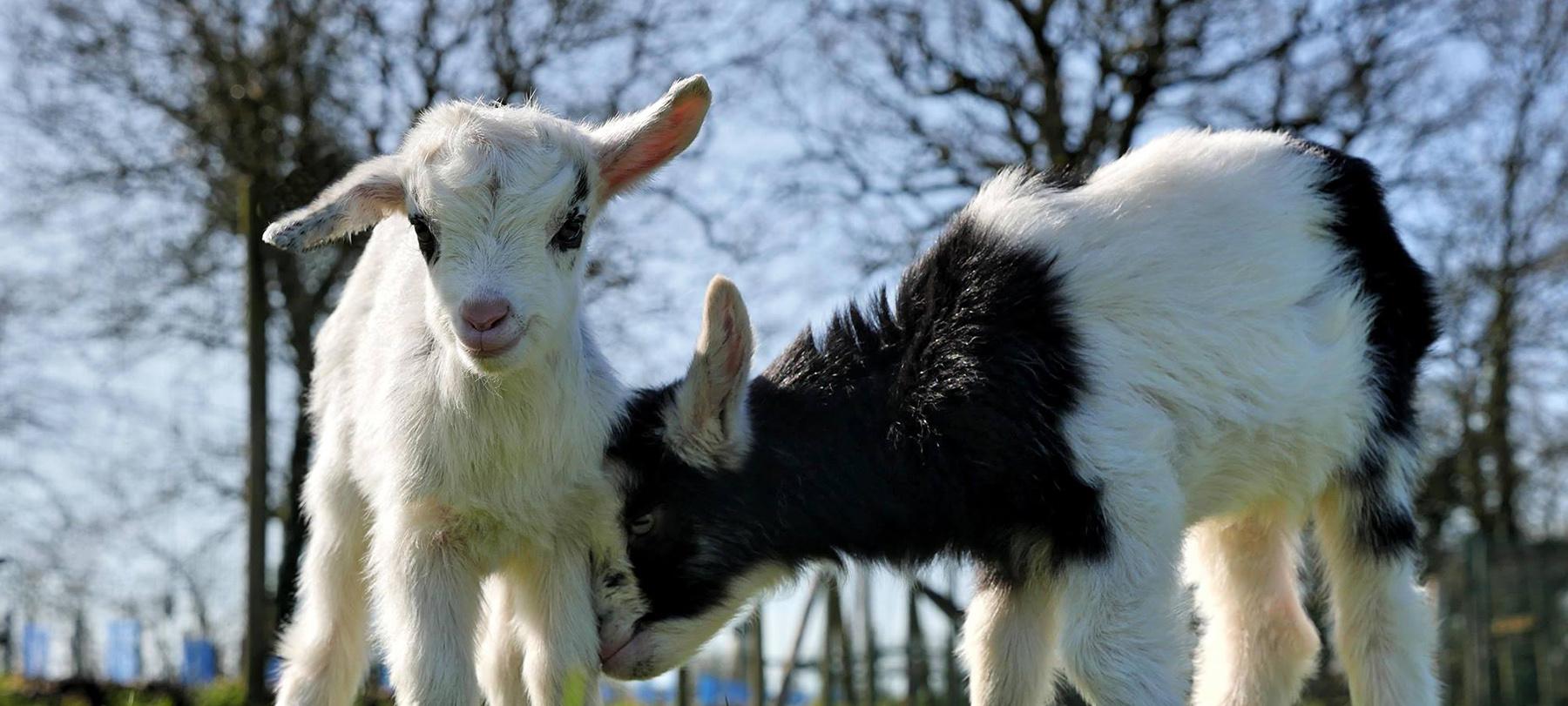 Les naissances les plus craquantes de la saison à l'Animalerie