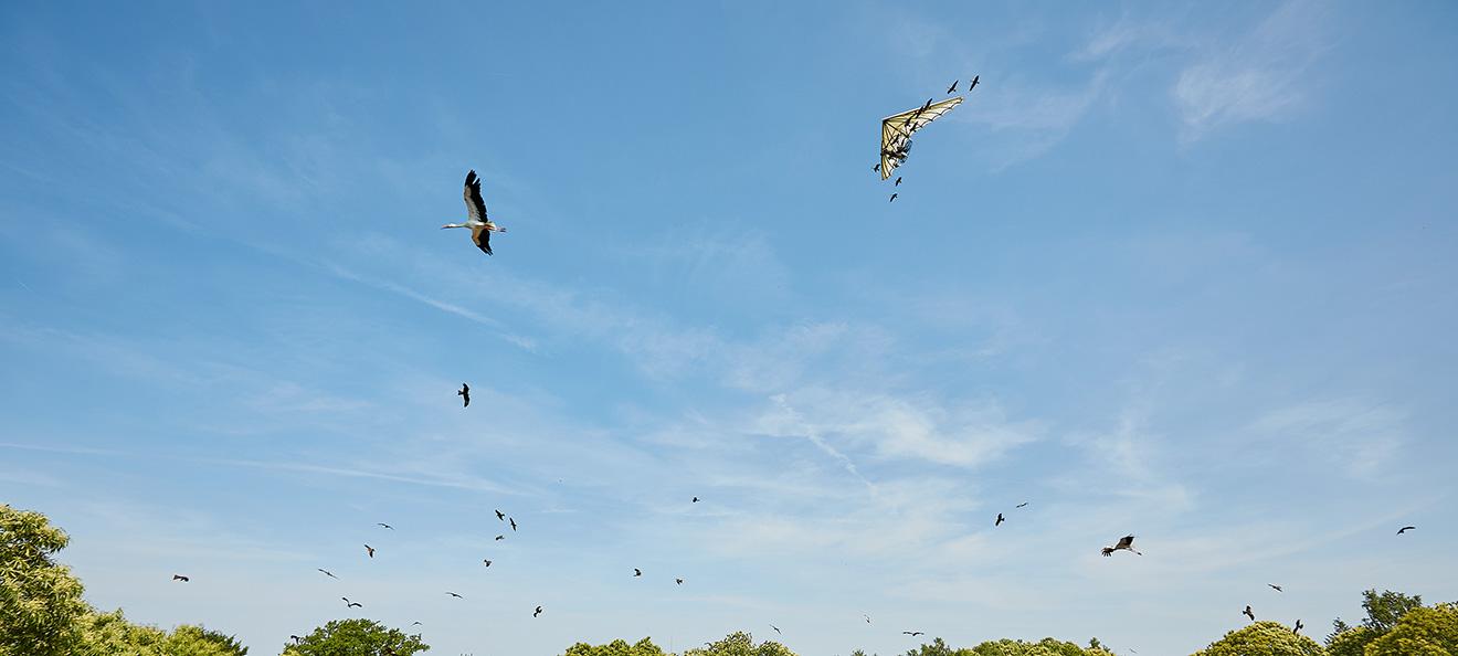 Grâce à son projet à Tolède, le Puy du Fou double son aide à la protection des aigles de Bonelli en Espagne